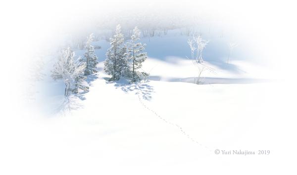 冬の森の樹木