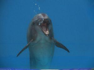 イルカの写真、イルカがこっちを向いている